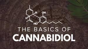 Cannabidiol (CBD) 101 - The Basics 1