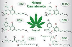 Cannabidiol (CBD) 101 - The Basics 2
